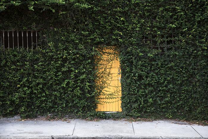 700_claudia tavares-jardim na floresta01