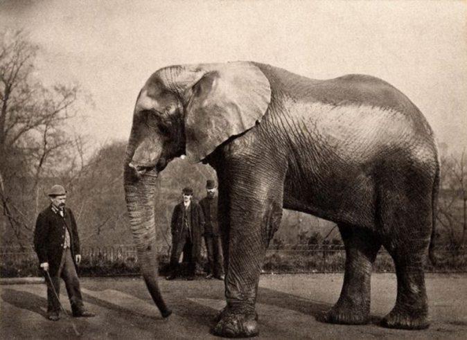 Jumbo e seu tratador, Scotty, nos Estados Unidos, em 1882